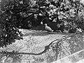 Een meeuw in Artis, Bestanddeelnr 189-0459.jpg