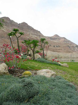 The Talisman (Scott novel) - Engaddi, now Ein Gedi, Israel