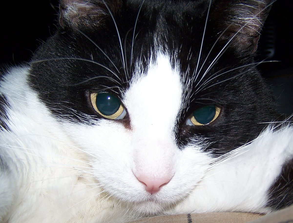 Science Diet Cat Food Canada