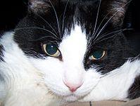 El C cat picture 7.jpg