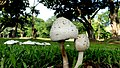 El Salvador - San Martin, Club Salvadoreño Corinto Hole 10 - panoramio (2).jpg