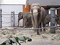 Elefantenhaus Tierpark Hellabrunn2.jpg