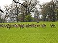 Englefield Estate Deerpark - geograph.org.uk - 2416.jpg