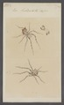 Ero - Print - Iconographia Zoologica - Special Collections University of Amsterdam - UBAINV0274 068 04 0003.tif