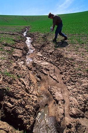 Severe soil erosion in a wheat field near Wash...