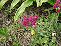 Especie de flora endémica en Parque Ecológico de Xochimilco 012.JPG