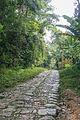 Estrada Real do Comércio na Reserva Biológica Federal do Tinguá.jpg