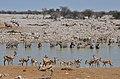 Etosha, Okaukuejo, napajedlo - Namibie - panoramio.jpg