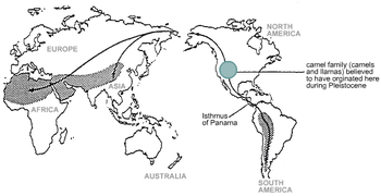 Map of the world showing distribution of camelids. Solid black lines indicate possible migration routes.