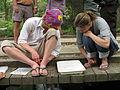 Examining aquatic macroinvertebrates (5332799327).jpg