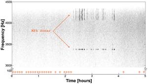 Example of Blue Whales' D calls in presence of MFA sonar - Melcón et al. 2012.png