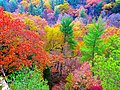 Fall Colors - panoramio (7).jpg