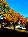 Fall Colors In Madison - panoramio.jpg