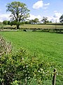 Farmland at Chapelhill - geograph.org.uk - 435105.jpg
