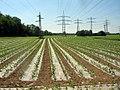 Feld zwischen Ettlingen und Wolfartsweier - geo.hlipp.de - 2687.jpg