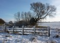 Fence, tree and field with snow - geograph.org.uk - 1625863.jpg