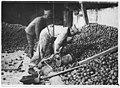 Ferme - Le Comité américain - les pommes prêtes à être hachées pour faire du cidre - Blérancourt - Médiathèque de l'architecture et du patrimoine - APD0004962.jpg