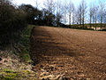Field boundary with pit in the distance - geograph.org.uk - 717359.jpg