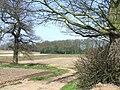 Fields, Essington Fruit Farm, Staffordshire - geograph.org.uk - 390987.jpg