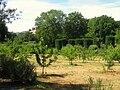 Filoli gardens - IMG 9319.JPG