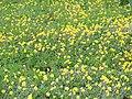 Flôres amarelas. - panoramio.jpg