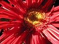 Fleur du Mal 01.jpg