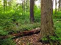 Flickr - Nicholas T - Tionesta Scenic Area (7).jpg