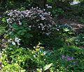 Flickr - brewbooks - Carla and George's Woodland Garden.jpg