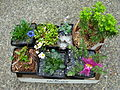 Flickr - brewbooks - Some plant purchases from the NARGS tour.jpg