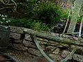 Flickr - brewbooks - Terrace view - our garden.jpg