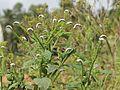Flora and Fauna Savandurga Karnataka (28).jpg