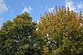 Flora della Sardegna 010 (03).jpg