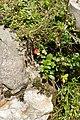 Flora in Landschaftsschutzgebiet Serles-Habicht-Zuckerhütl 03.jpg