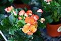Flora of Thailand (2).jpg