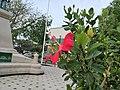Flors dels jardins de la Plazuela Elías Aguirre de Chiclayo05.jpg