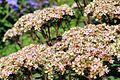 Flower 78 (8039816935).jpg