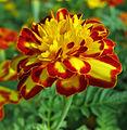 Flowers (174).jpg