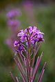 Flowers (4169999702).jpg