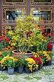 Flowers - Lan Su Chinese Garden - Portland, Oregon - DSC01252.jpg