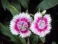 Flowers - Uncategorised Garden plants 157.JPG