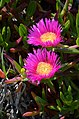 Flowers XI (6980076165).jpg