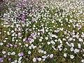 Flowers at Lodi Gardens 2017.jpg