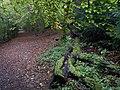 Footpath along the edge of Banstead Wood - geograph.org.uk - 583783.jpg