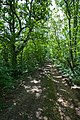 Footpath through Belmont Copse, Wootton Common - geograph.org.uk - 518536.jpg