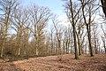 Forêt Départementale de Beauplan à Saint-Rémy-lès-Chevreuse le 21 février 2018 - 06.jpg