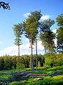 Forêt de Soignes 07.JPG