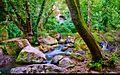 Forest (7171668377).jpg