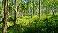 Forest Light (7442650090).jpg