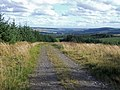 Forest Track - geograph.org.uk - 563881.jpg