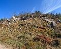 Forest glade - Katzenkopf.jpg